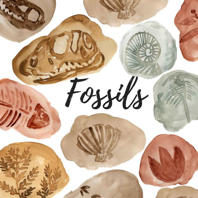Watercolor dinosaur graphics animal. Shell clipart fossil