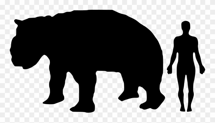 Fossil clipart anthropology. Diprotodon optatum png