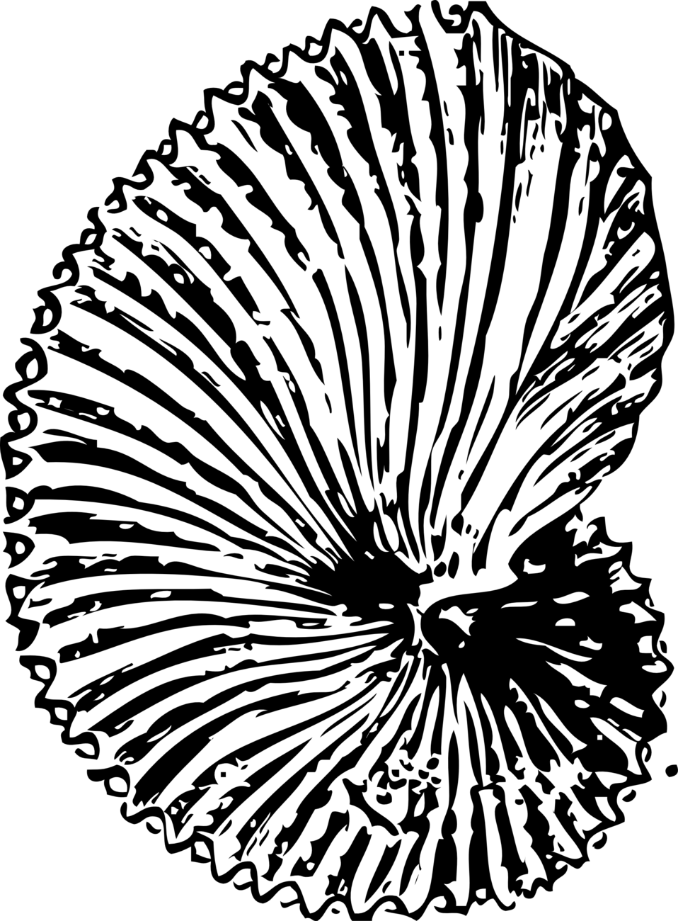 Public domain clip art. Shell clipart fossil