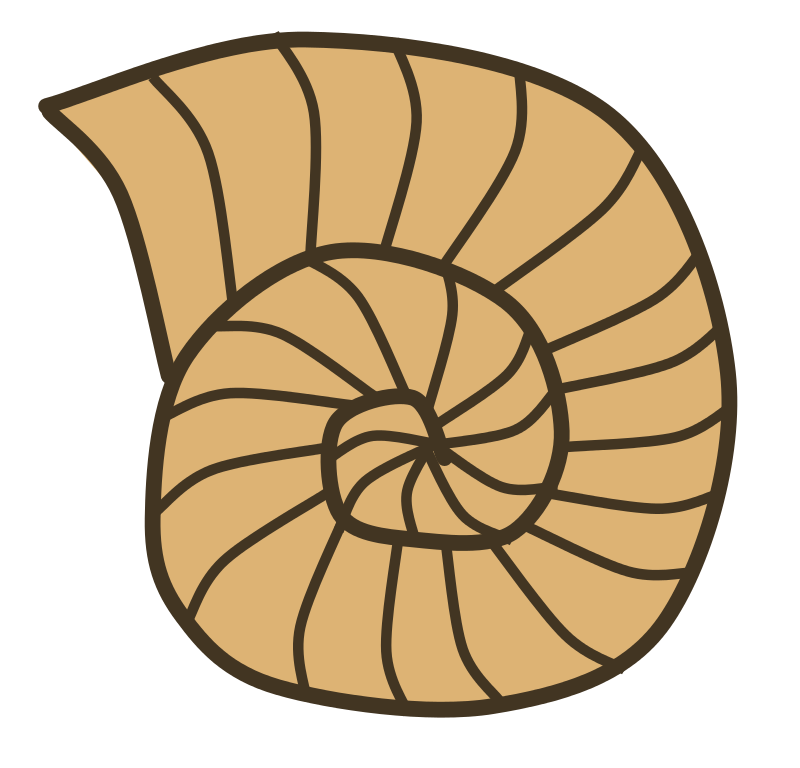 Fossils photos of. Shell clipart line