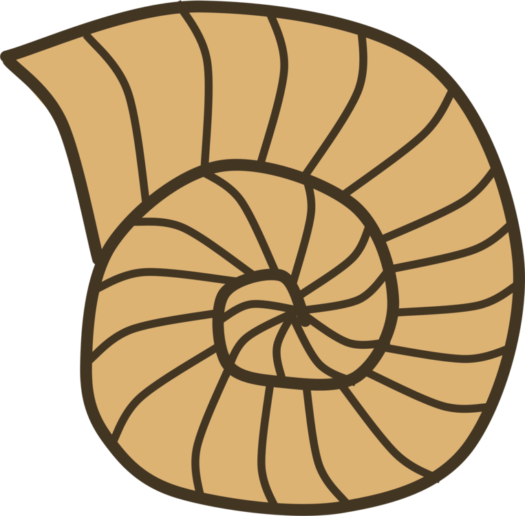 Nautilida symmetry png royalty. Fossil clipart invertebrate