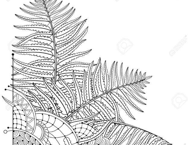 X free clip art. Fossil clipart leaf