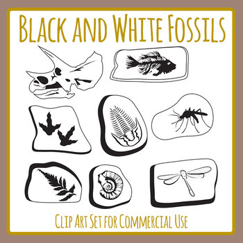 Fossil clipart outline. Worksheets teaching resources tpt
