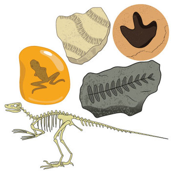 Fossils clip art ii. Fossil clipart preserved