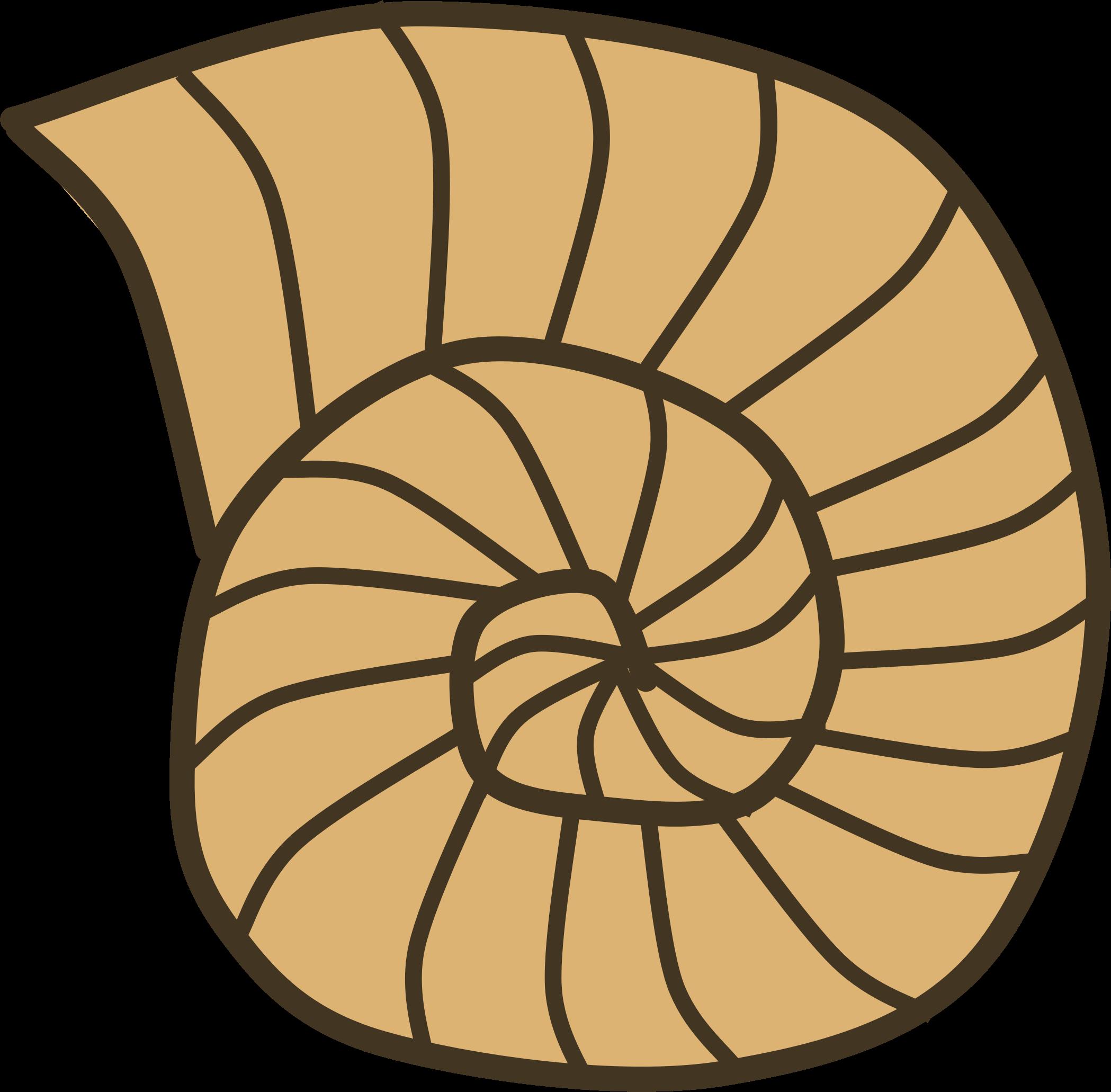 shell clipart shell spiral