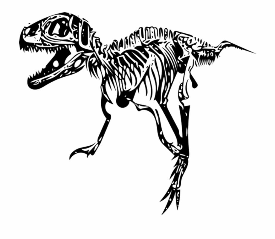 Tyrannosaurus dinosaur skeleton png. Fossil clipart t rex fossil