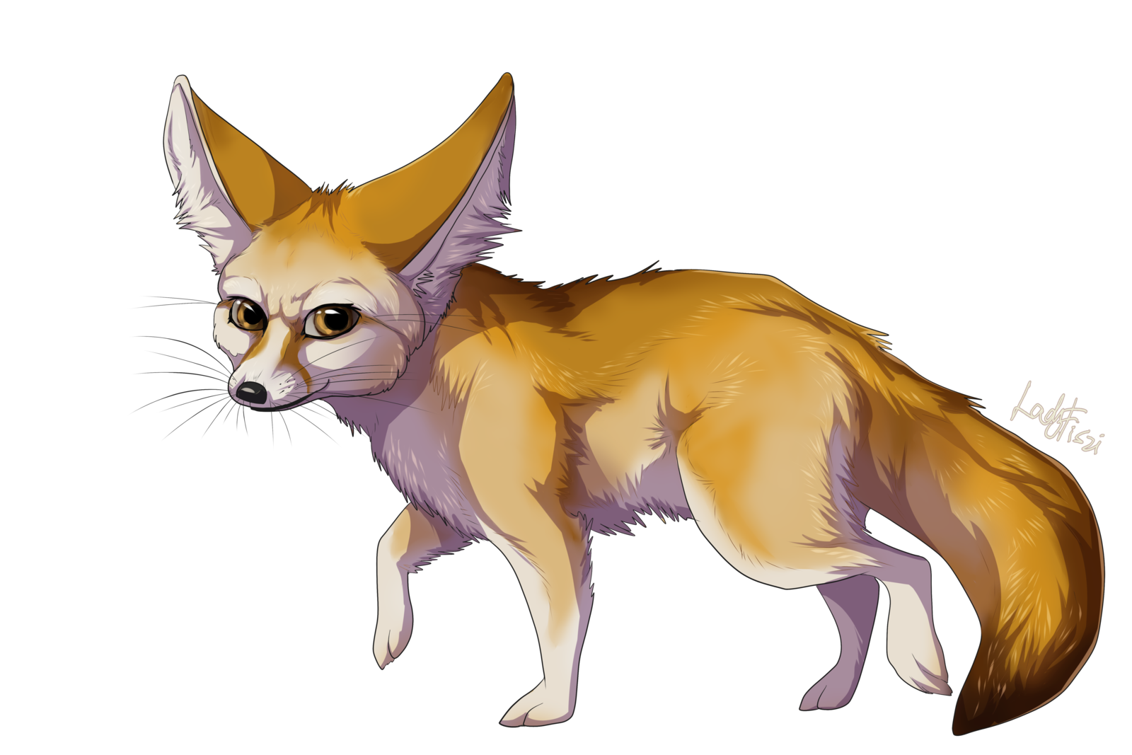 collection of transparent. Fox clipart bat eared fox