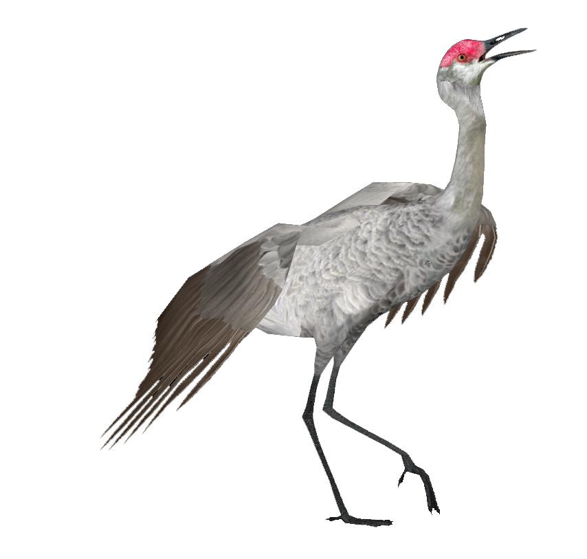 Fox clipart crane. Pin by ann tuite