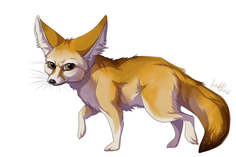 Fox clipart desert fox. Fennec ourclipart pin