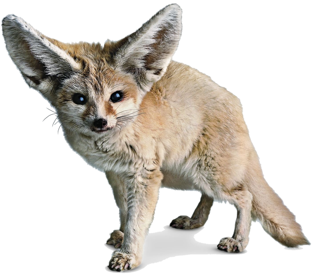 Png photos peoplepng com. Fox clipart fennec fox