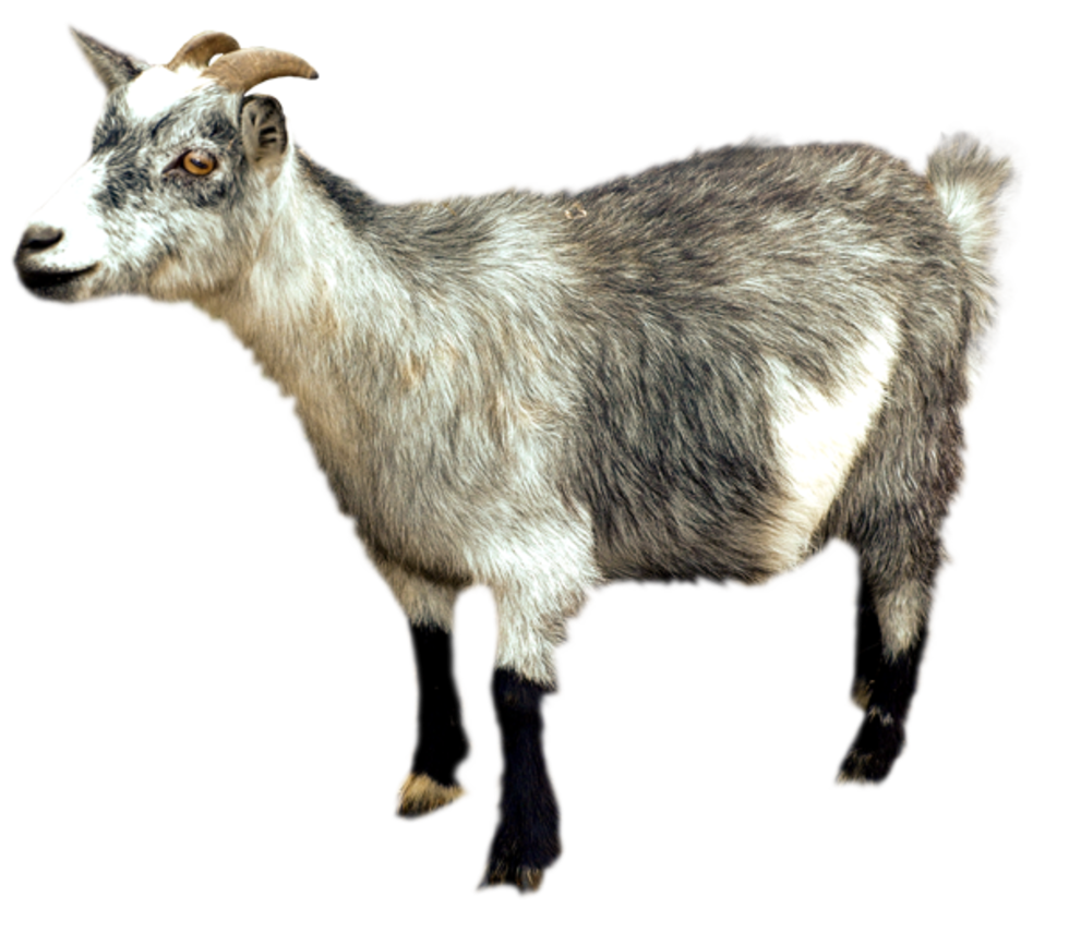 Pin by izzy c. Goat clipart strong