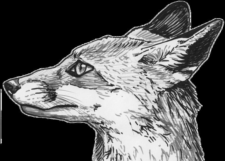 Fox clipart profile. Silvercrossfox page
