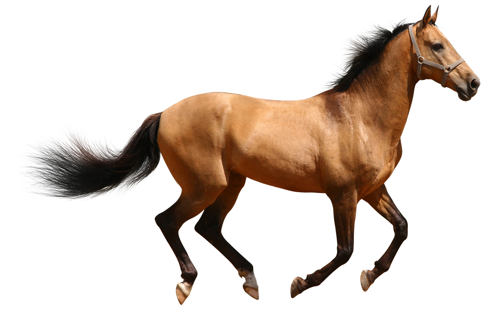 Real animal png transparent. Fox clipart realistic