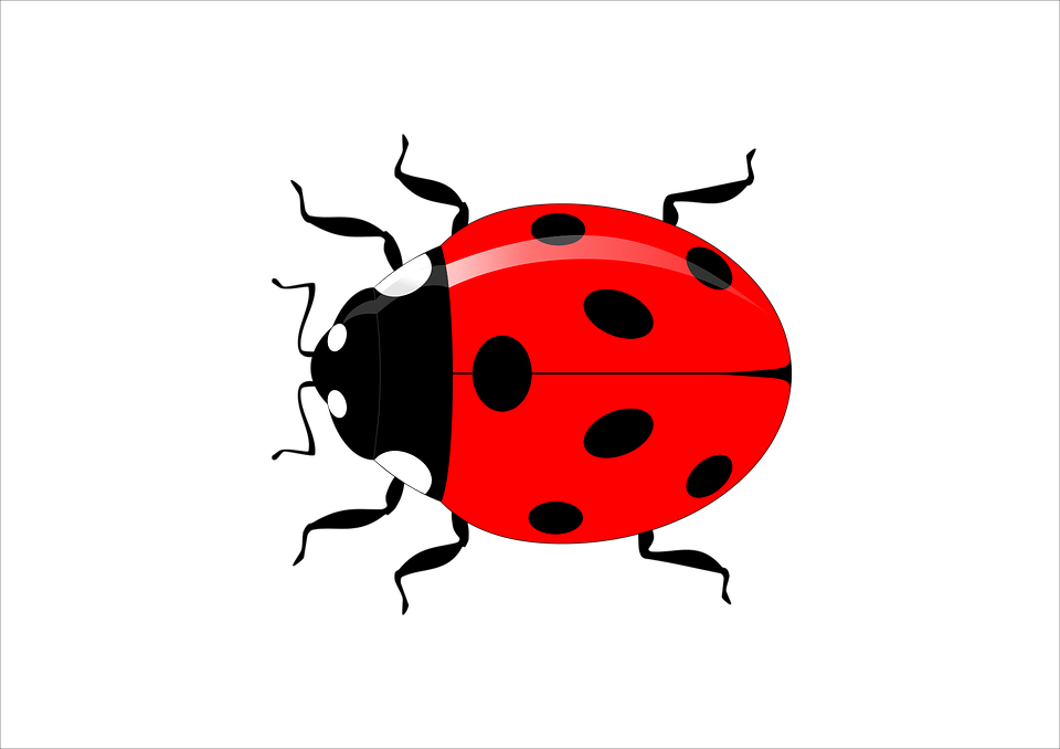 Collection of flying ladybug. Fraction clipart animated
