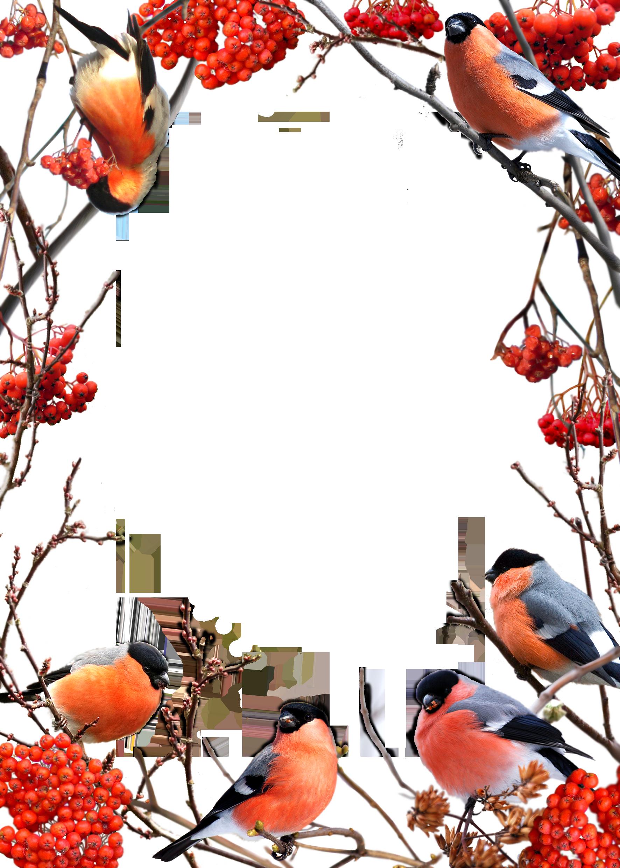 c de orig. Frames clipart bird