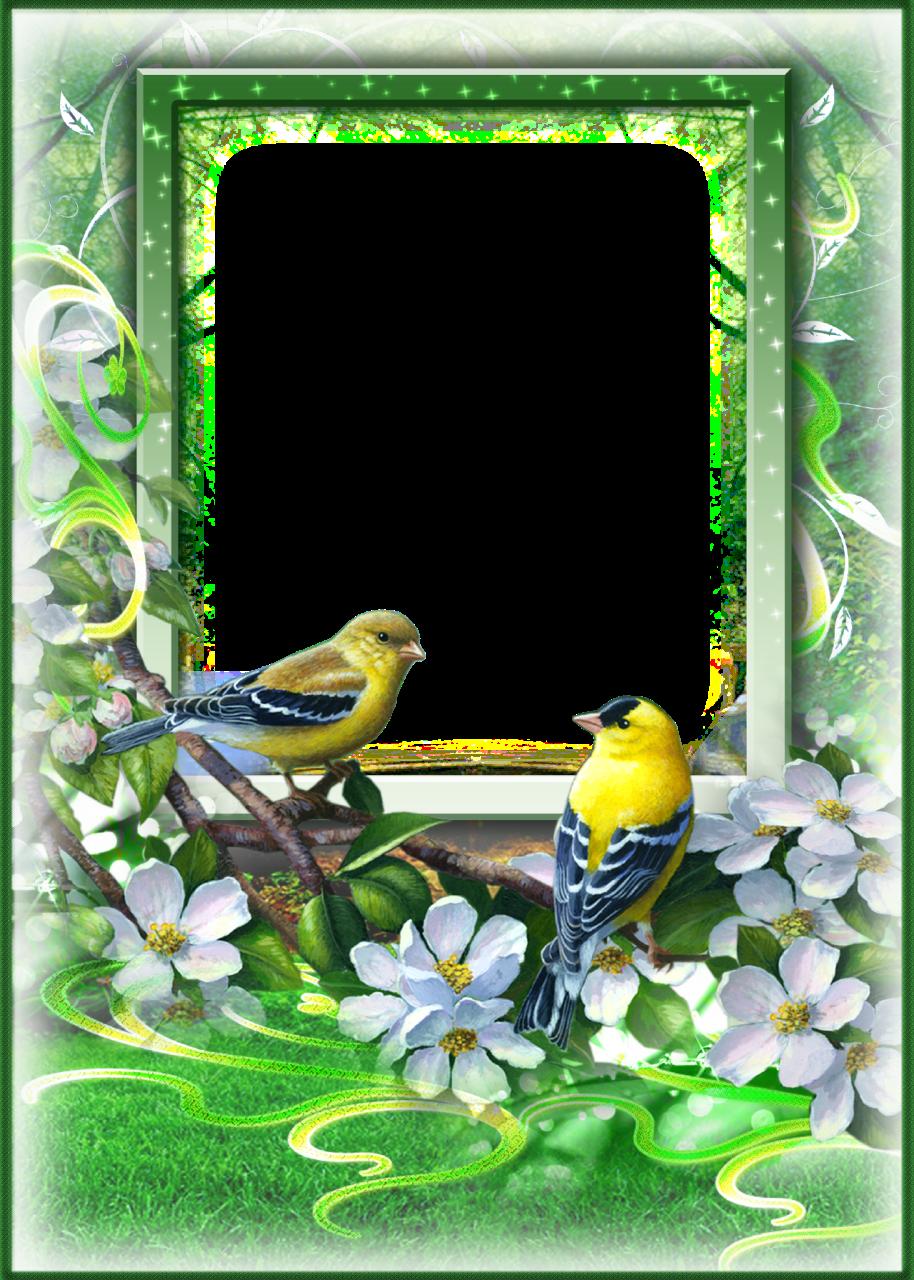 Frames clipart bird. Green spring photo frame