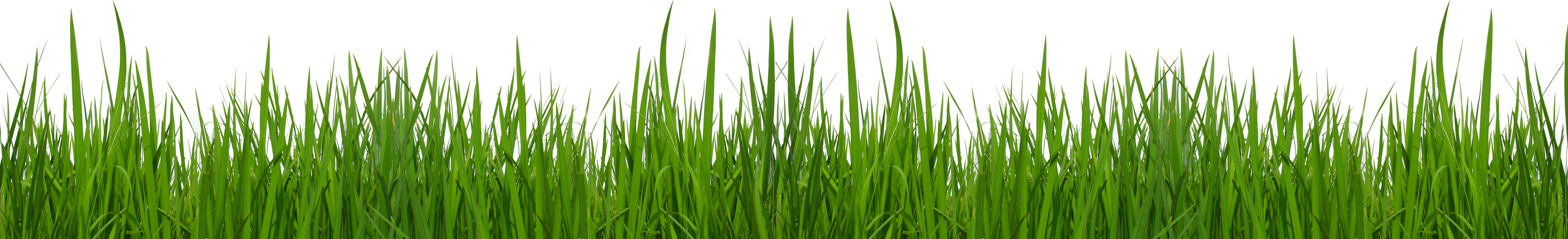Grass clipart crop. Ground with flowers picture