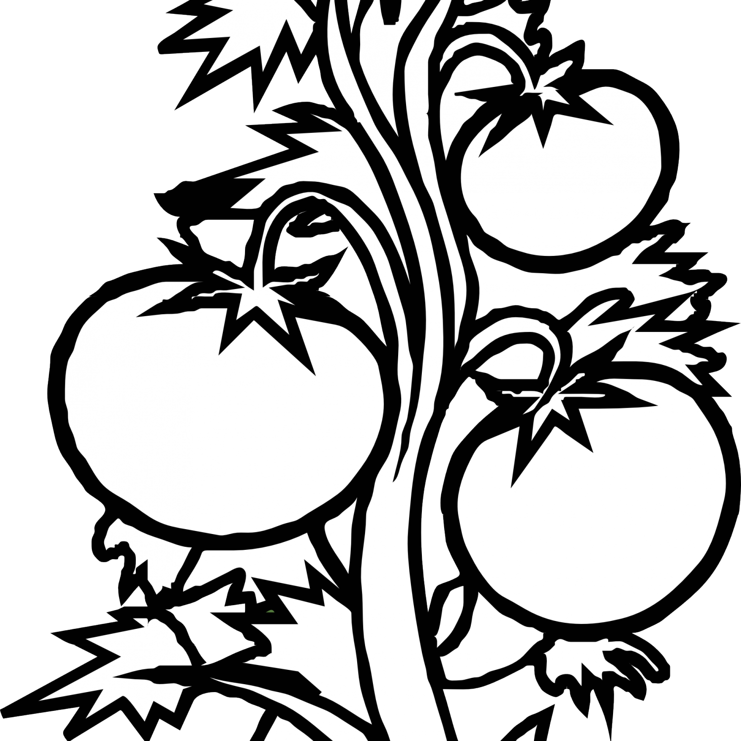 Plants black and white