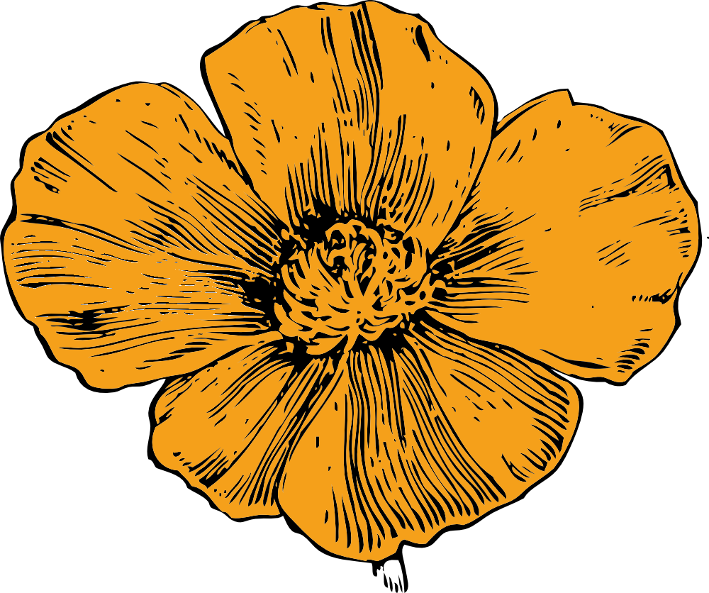 California t shirt stuff. Poppy clipart 5 flower