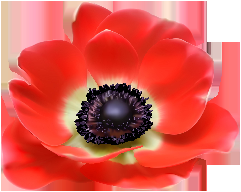 Euclidean vector clip art. Poppy clipart red poppy