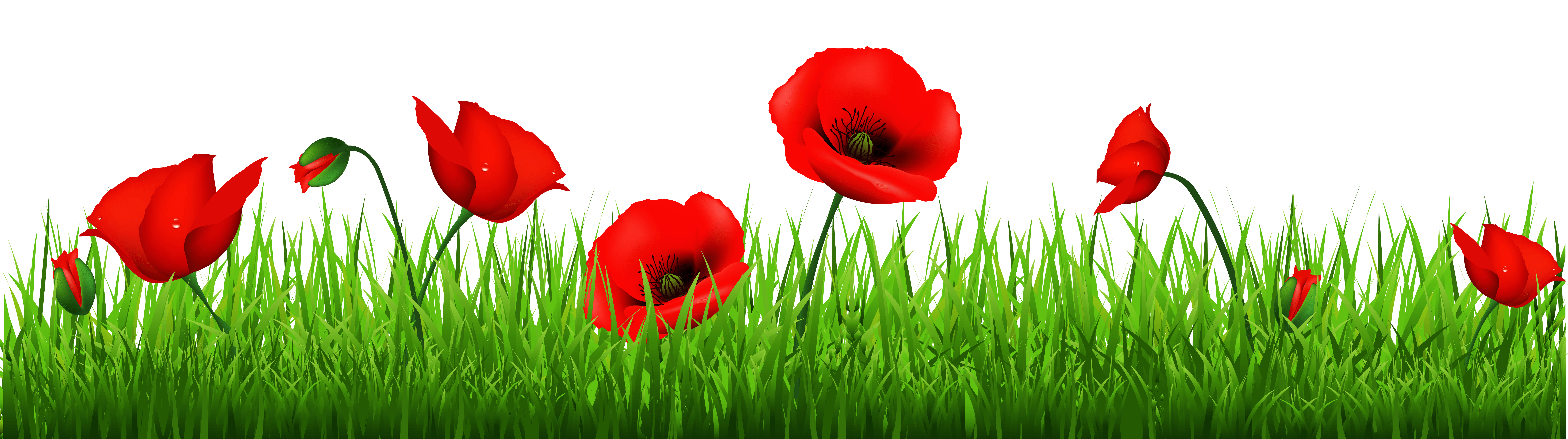Poppy clipart free vector.  collection of border
