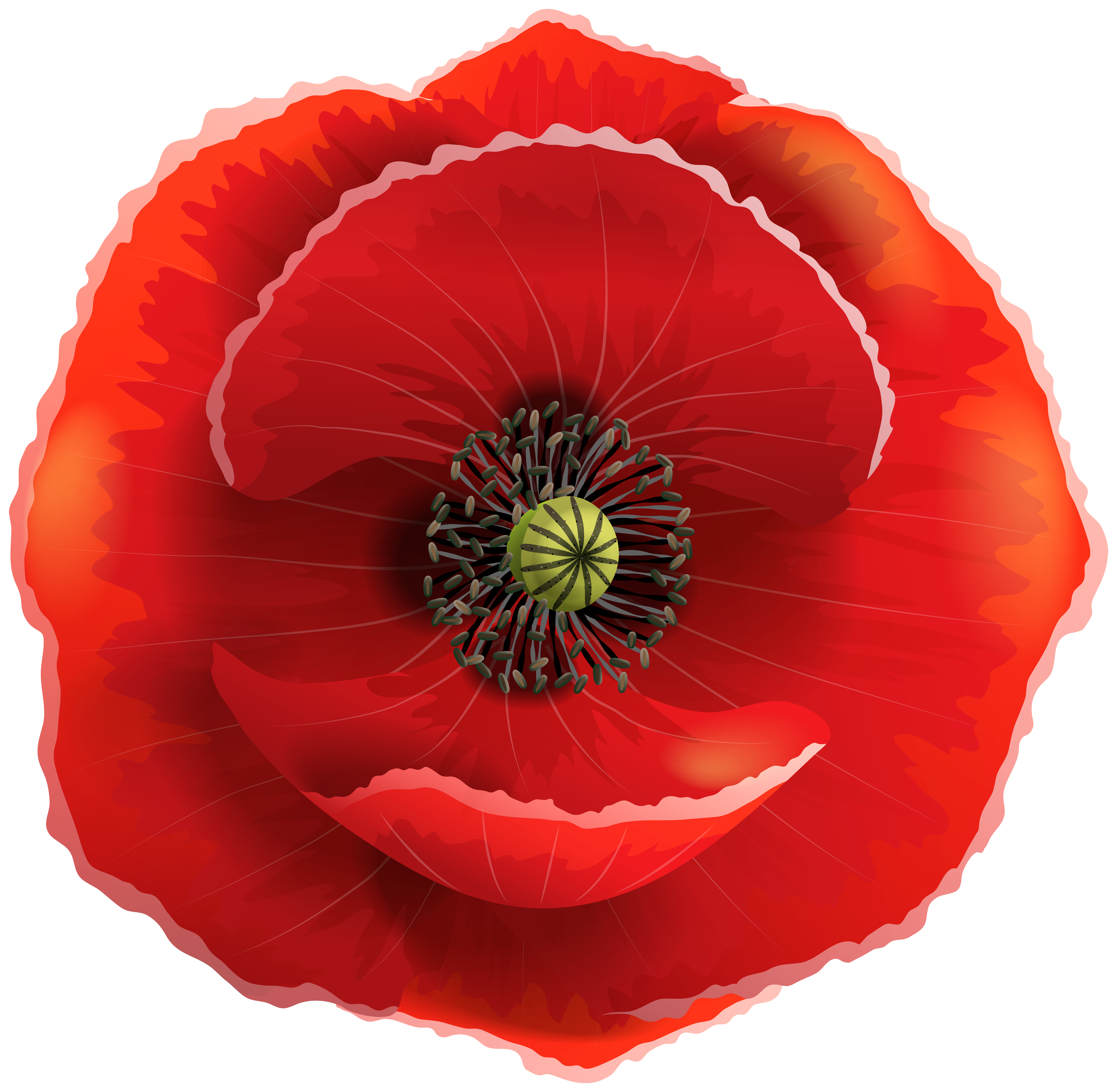 Transparent png clip art. Poppy clipart clear background