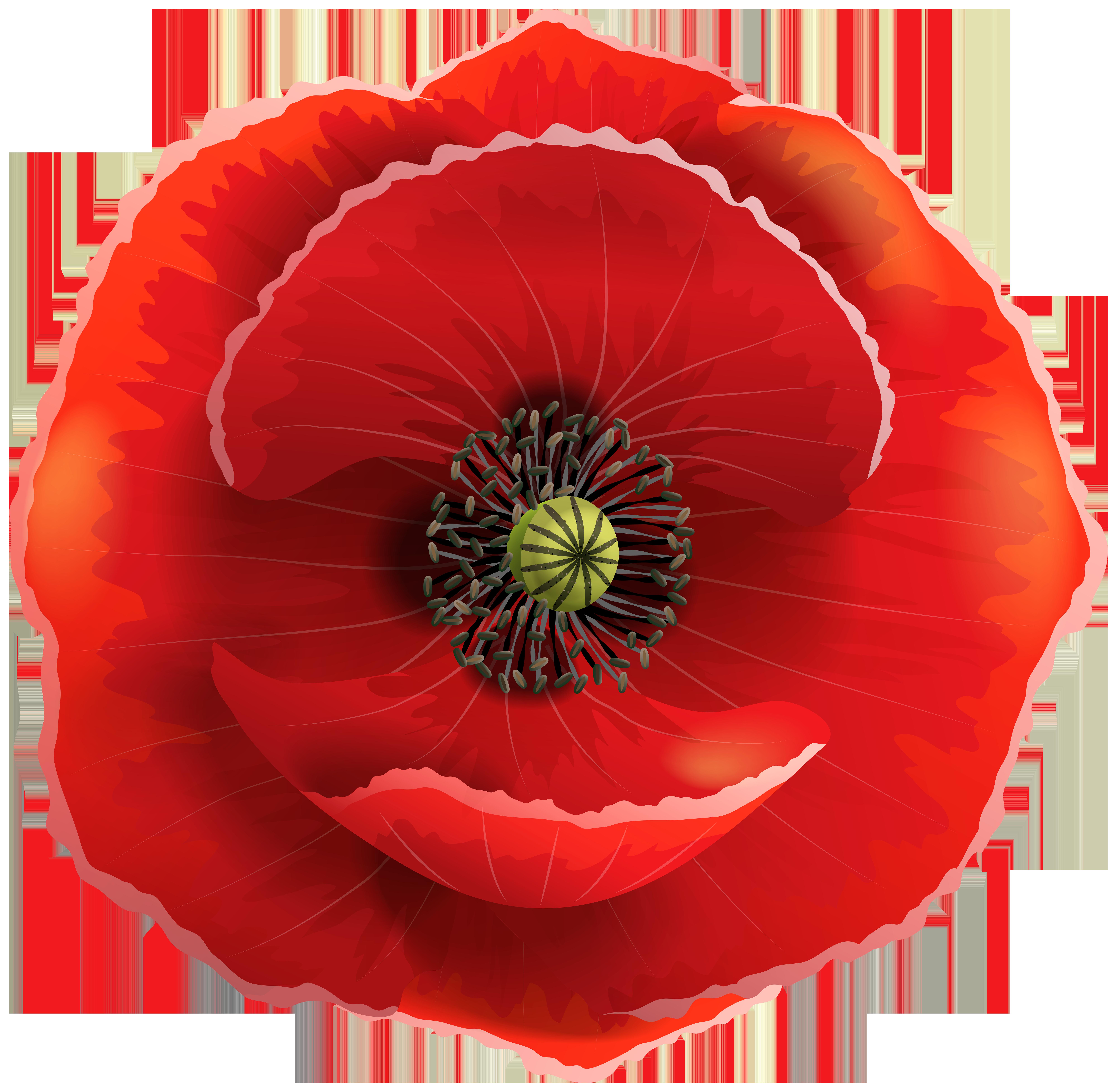 Transparent clip art image. Poppy flower png
