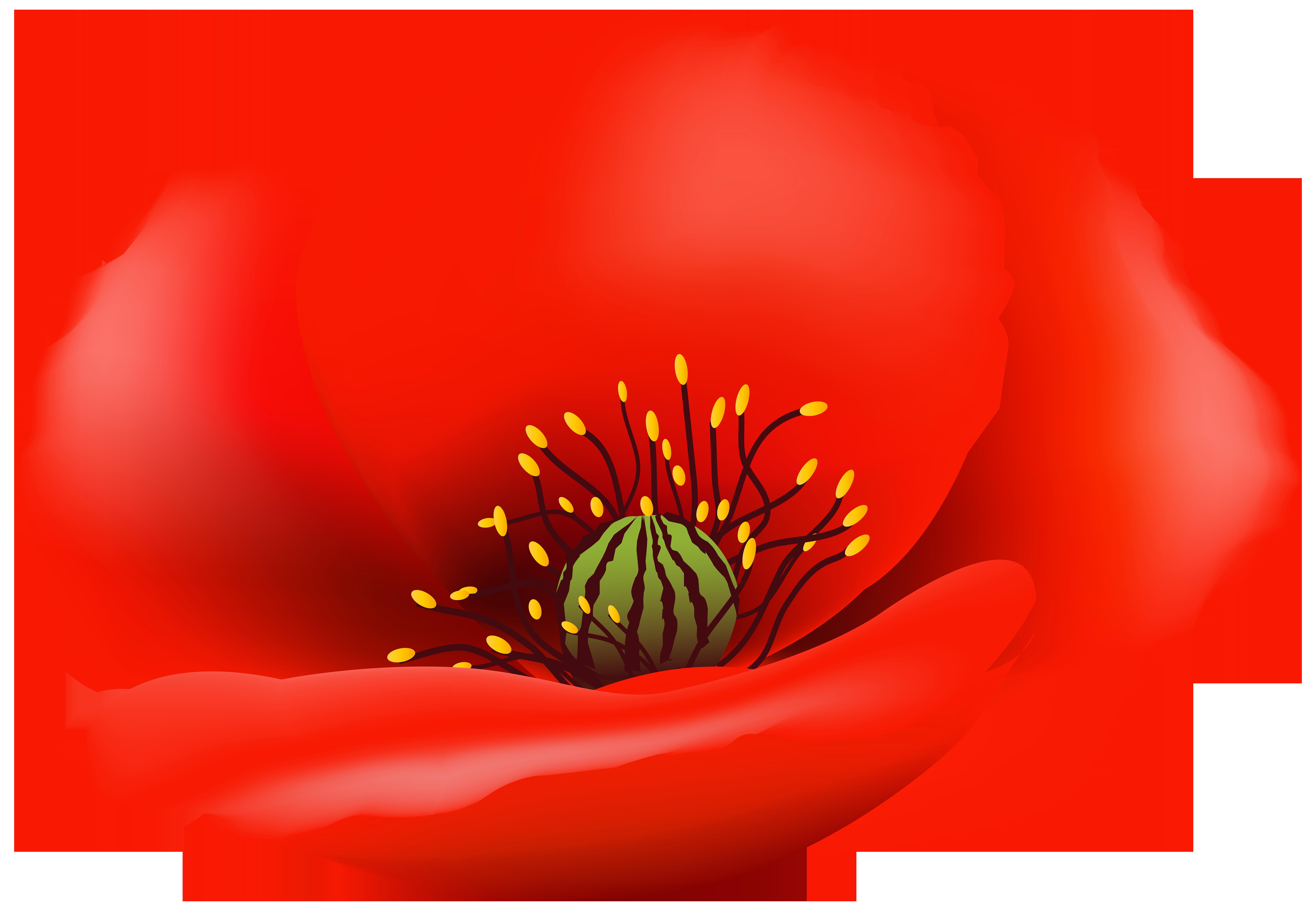 Poppy clipart transparent background. Flower png clip art