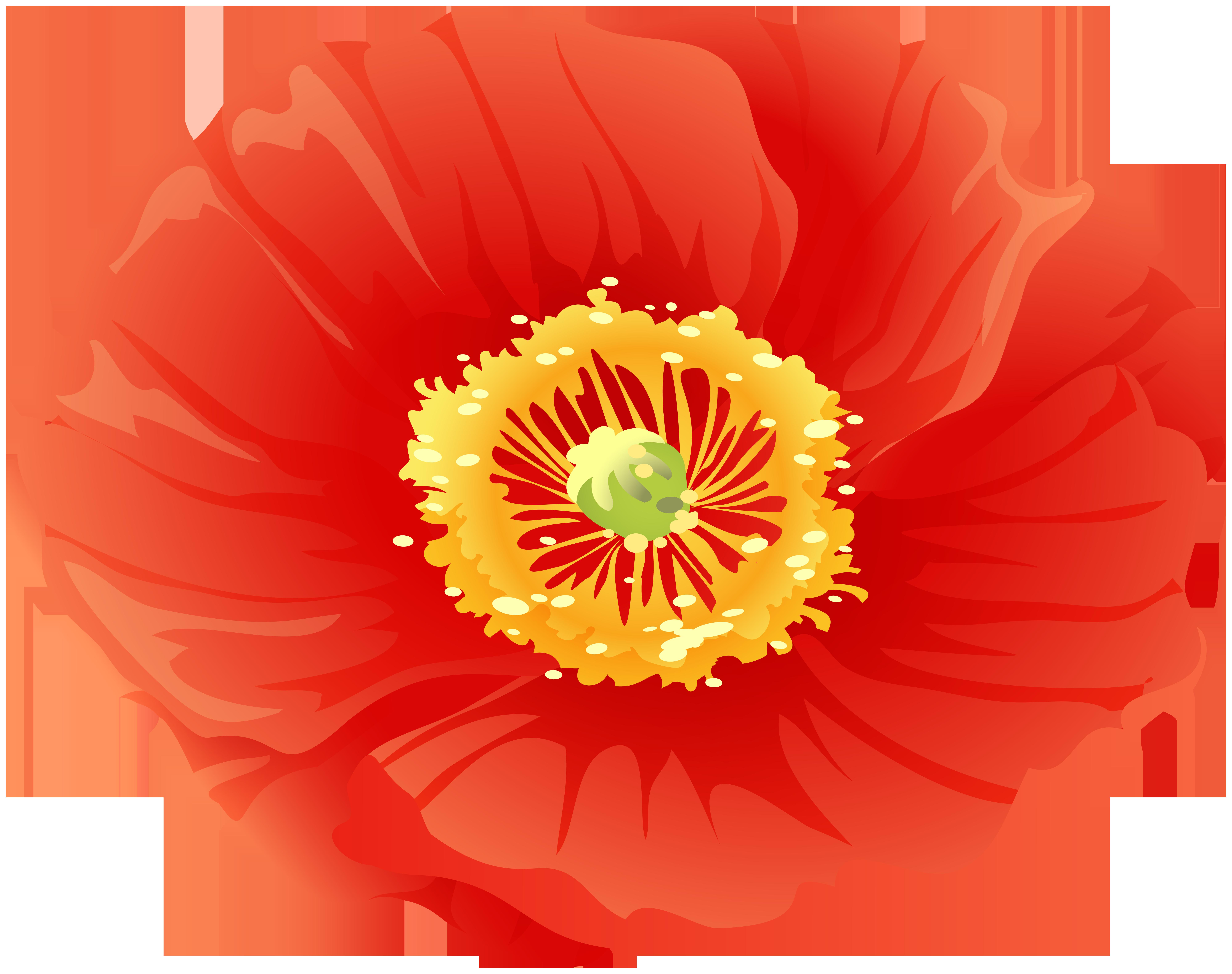 Flower clip art gallery. Poppy clipart red poppy