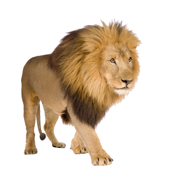Lion image by alwa. Free png images download