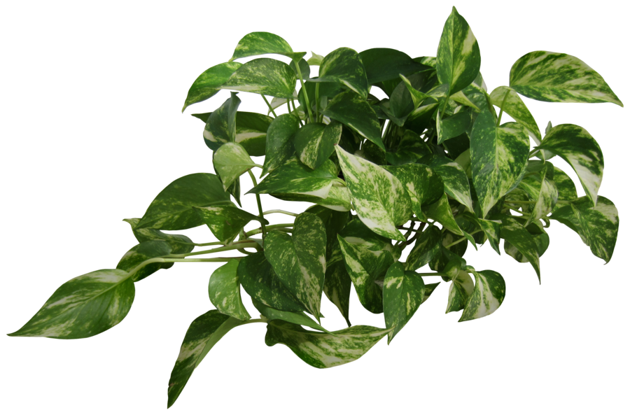 Free png images for photoshop.  plants download on