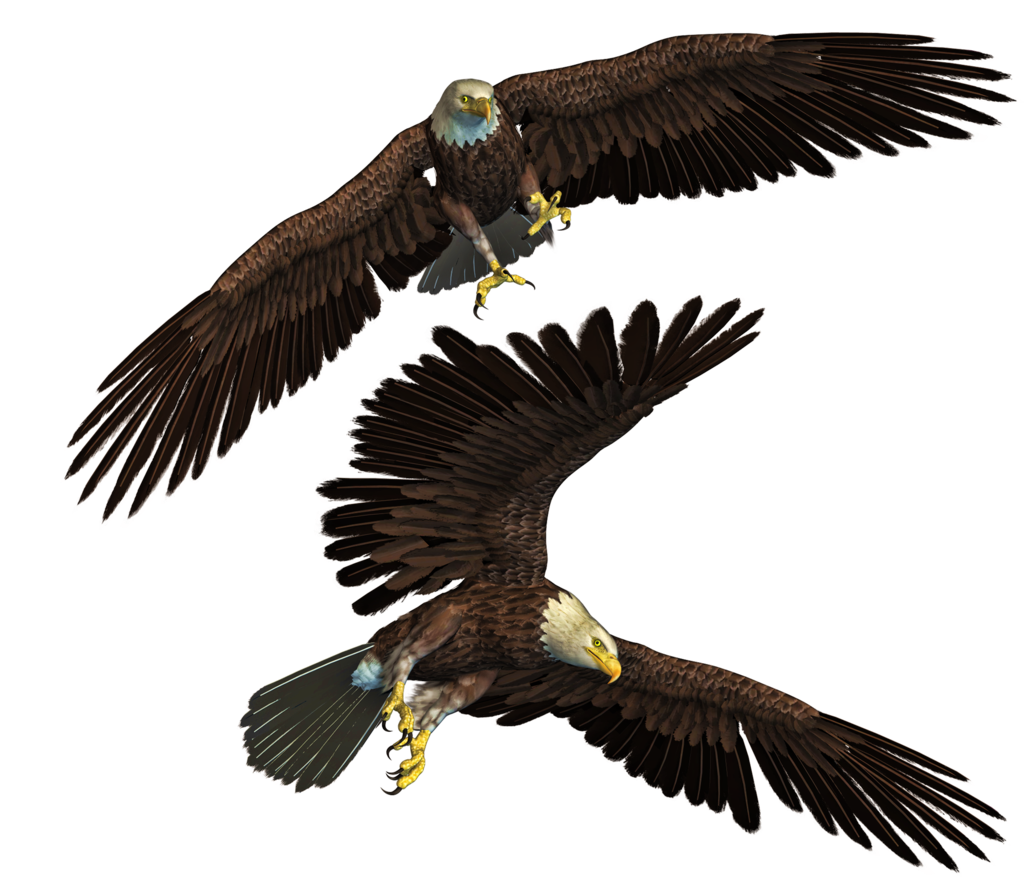 Free png images for photoshop. Eagle stock manipulation by