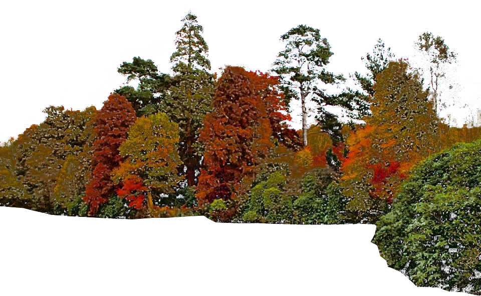Trees background check all. Free png images with transparent backgrounds