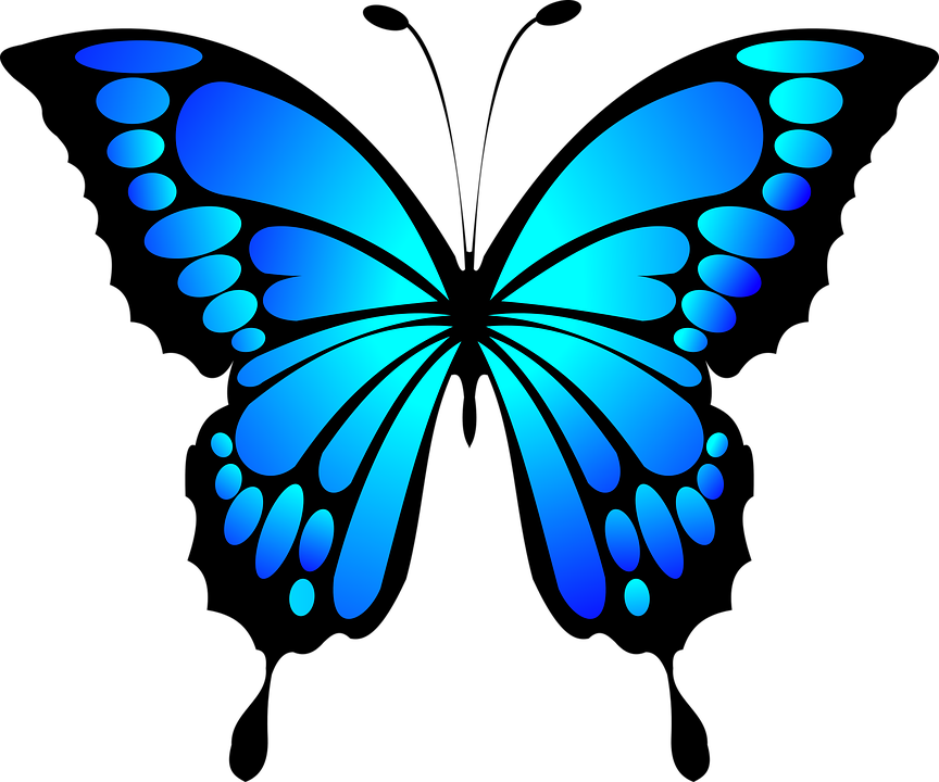 Tribal shop of library. Frog clipart butterfly