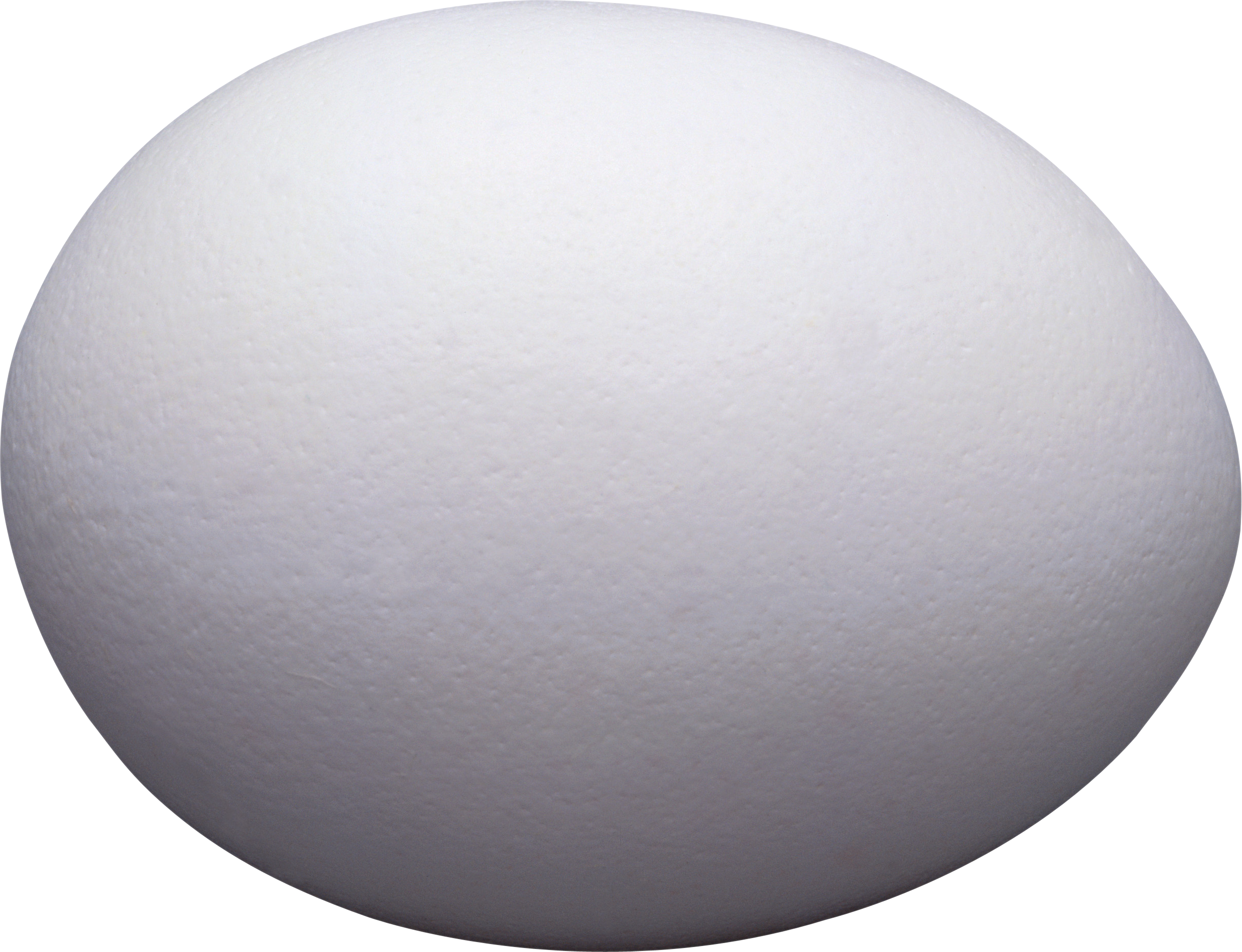Shell clipart clear. Egg nine isolated stock