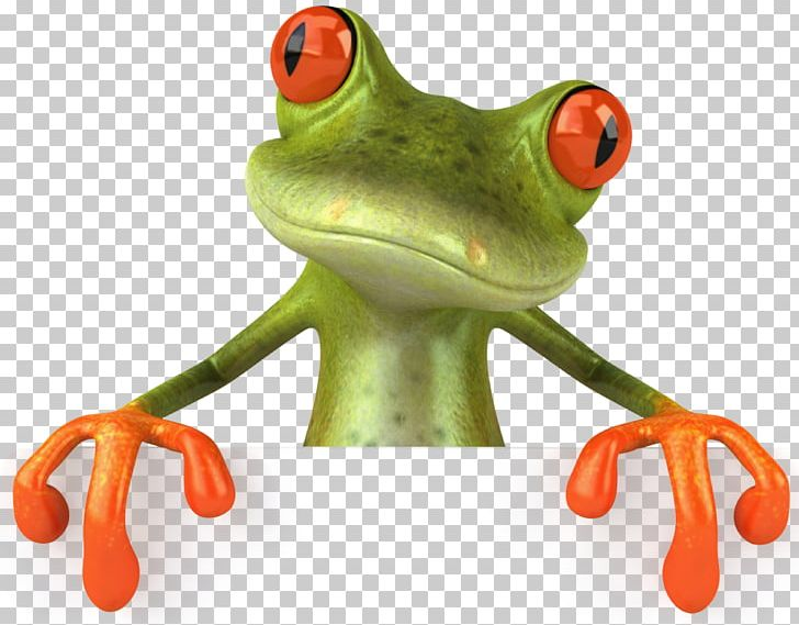 Png amph animals australian. Frog clipart glass frog