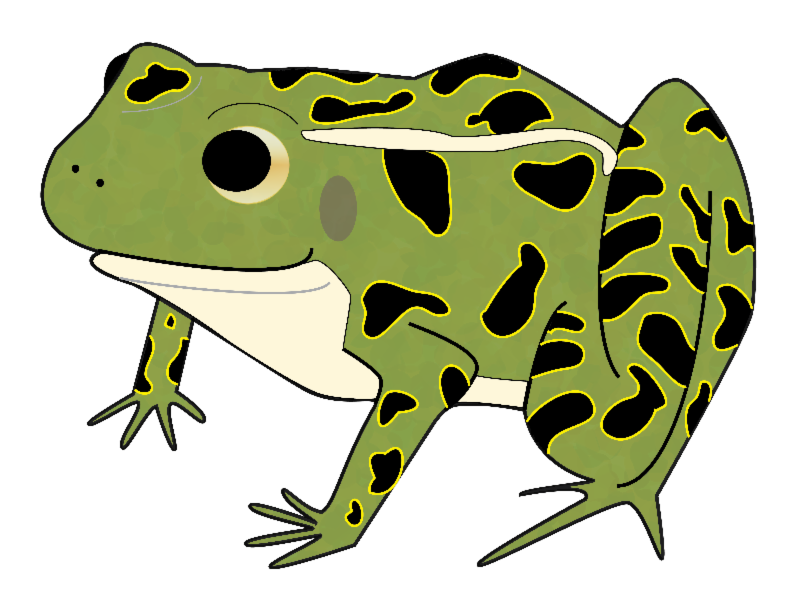 Frogs clipart bullfrog. What is a watershed