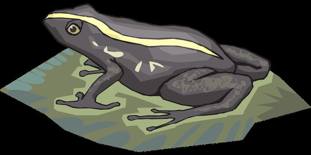 Frog clipart poison dart frog. Amphibian tadpole clip art