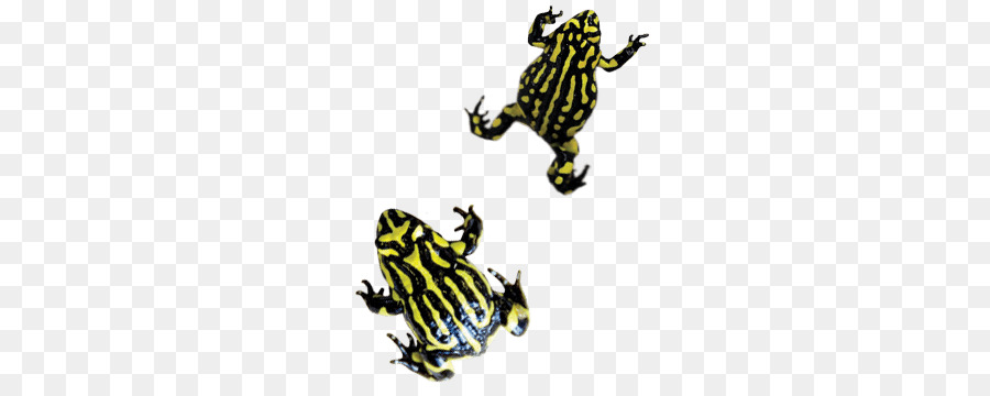 Frogs clipart amphibian. Frog cartoon amphibians yellow