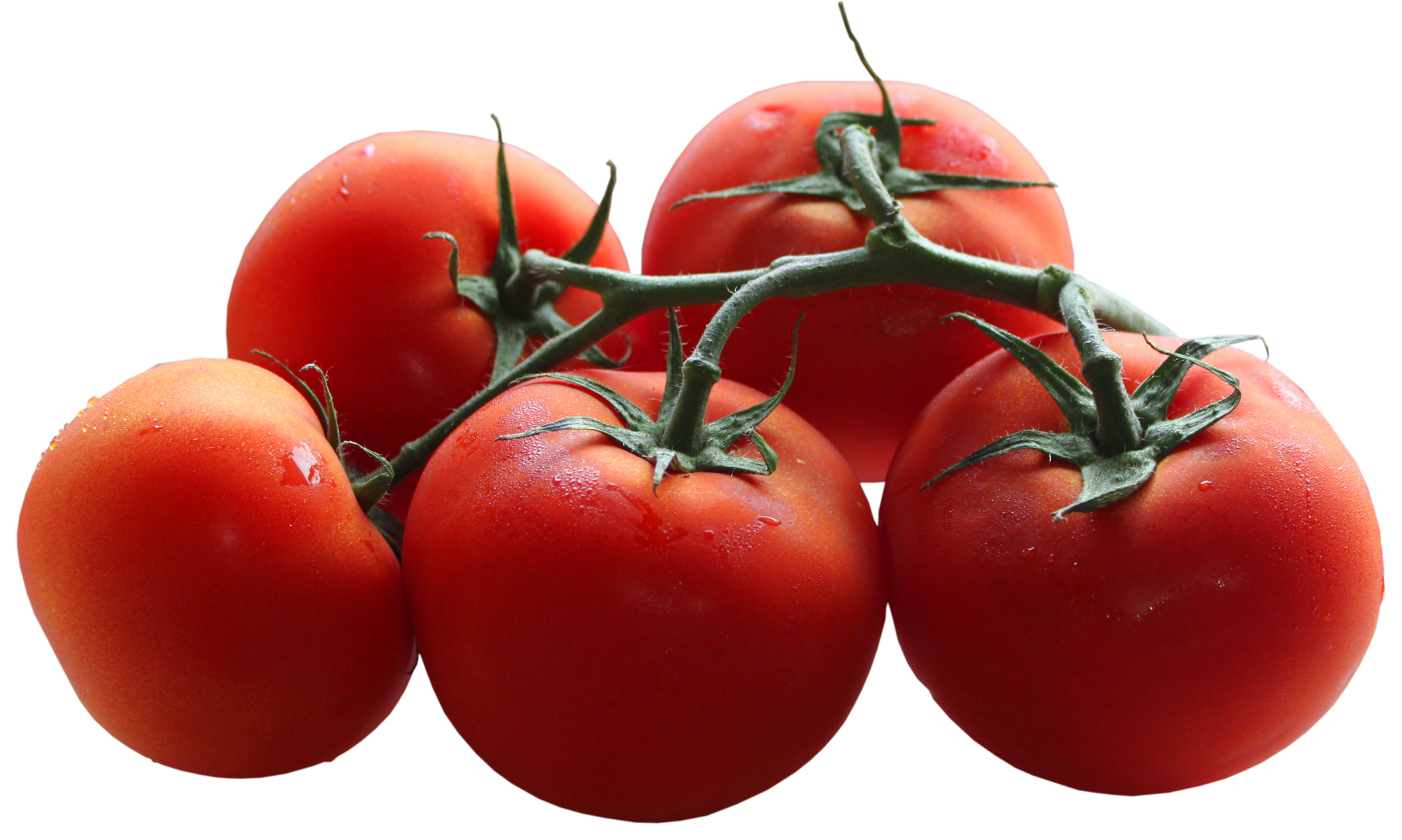 Tomatoes clipart animated. Bush tomato clipground