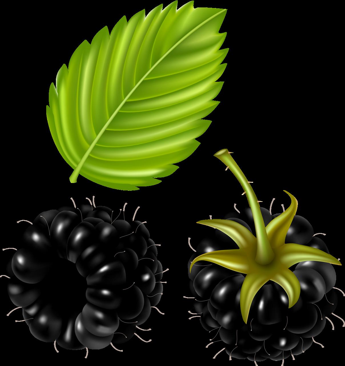 png clip art. Fruit clipart food item