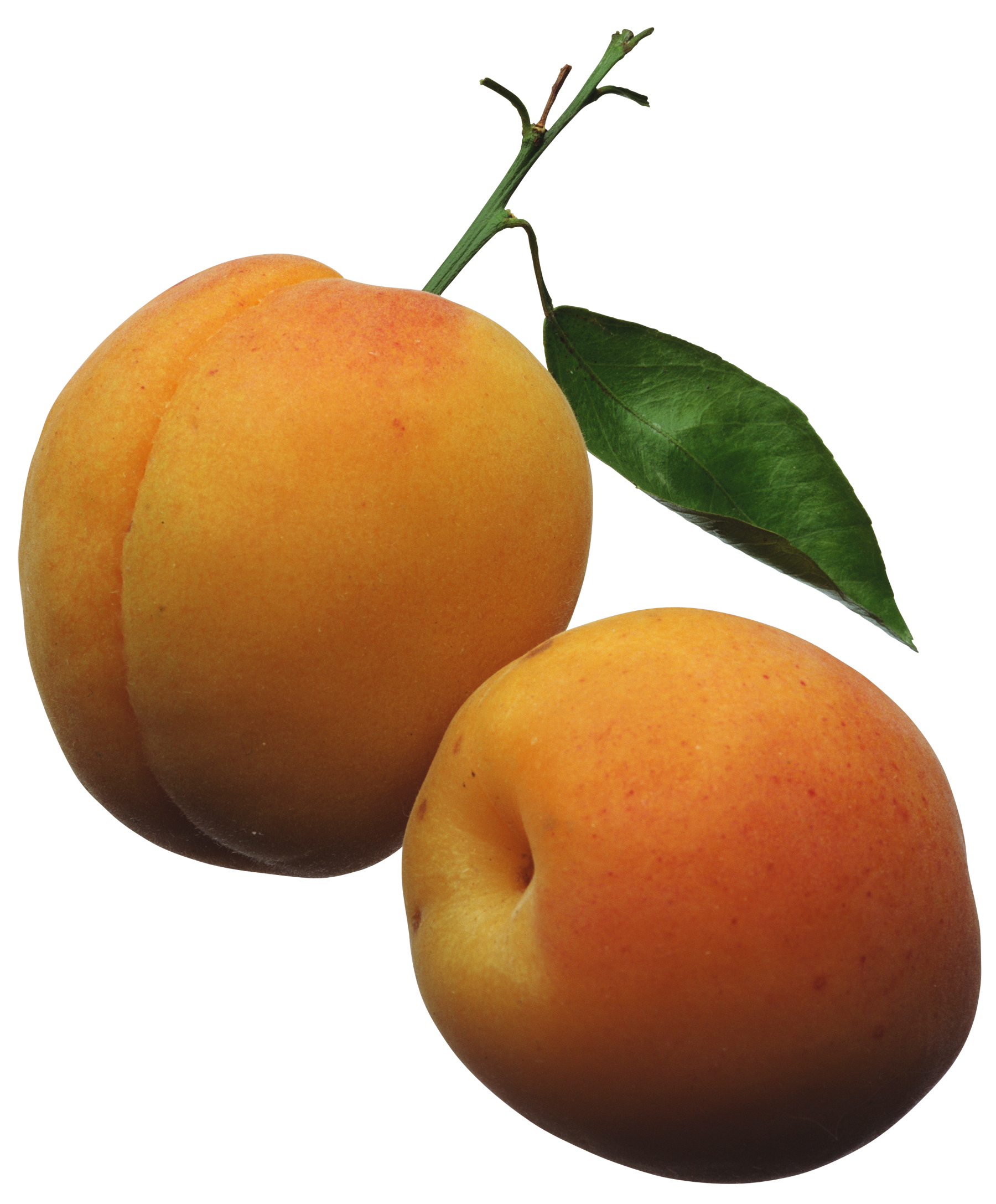 Fruit clipart food item. Apricots png picture clippart