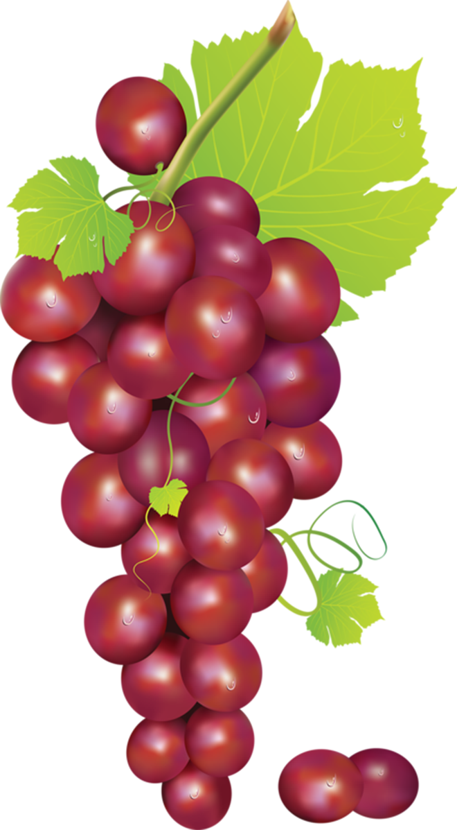grape clipart friuts