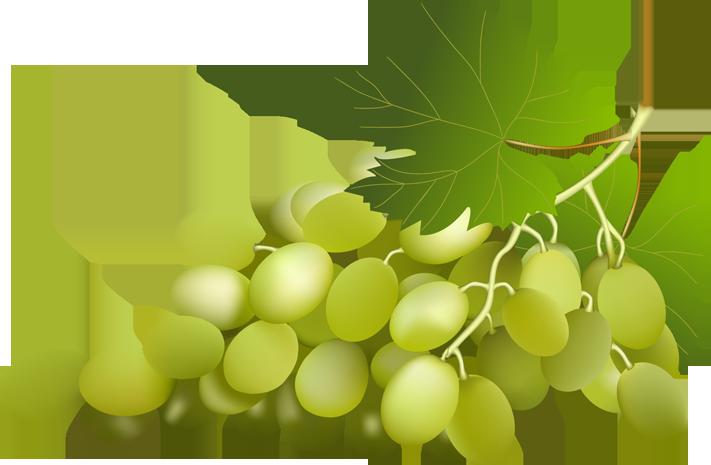 Grapes vine with leaf. Fruit clipart grape