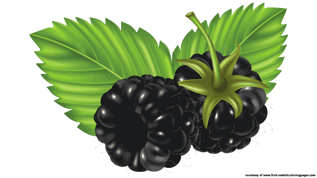 Fruit clipart green fruit. Free awesome blackberry names