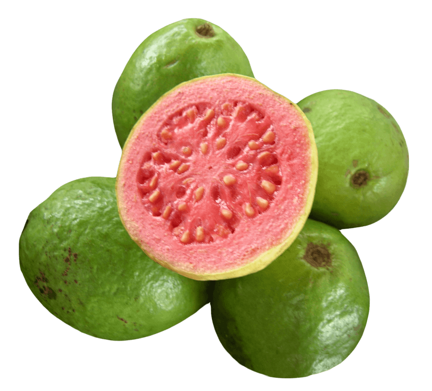 green clipart guava