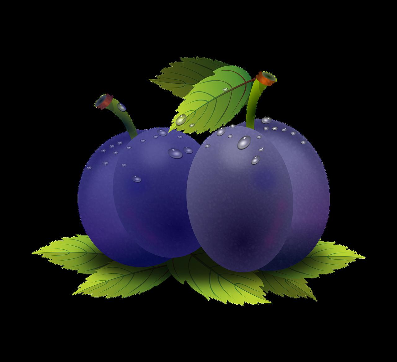 Fruit clipart nuts. Food am ixoa plum
