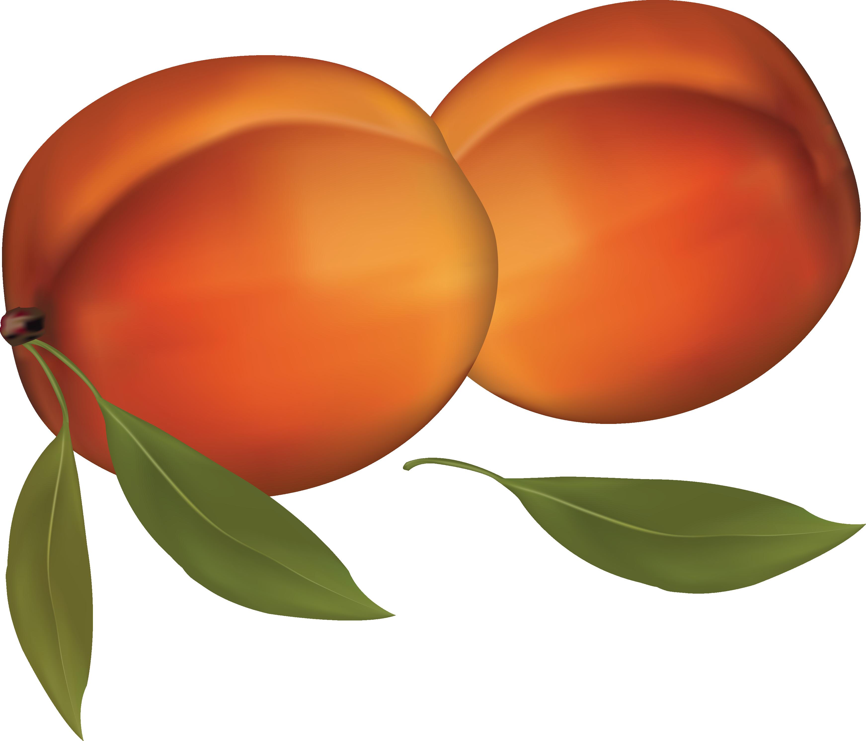 Pear clipart peach. Jokingart com download free