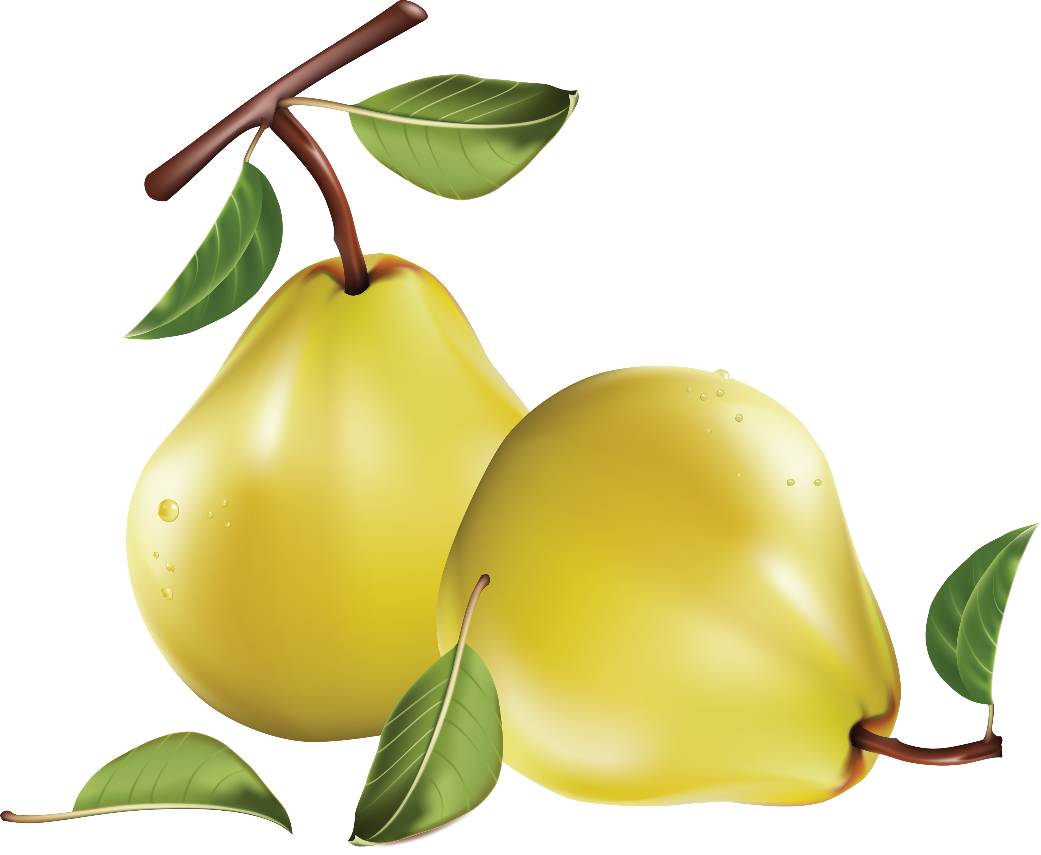 Pear PNG images free download