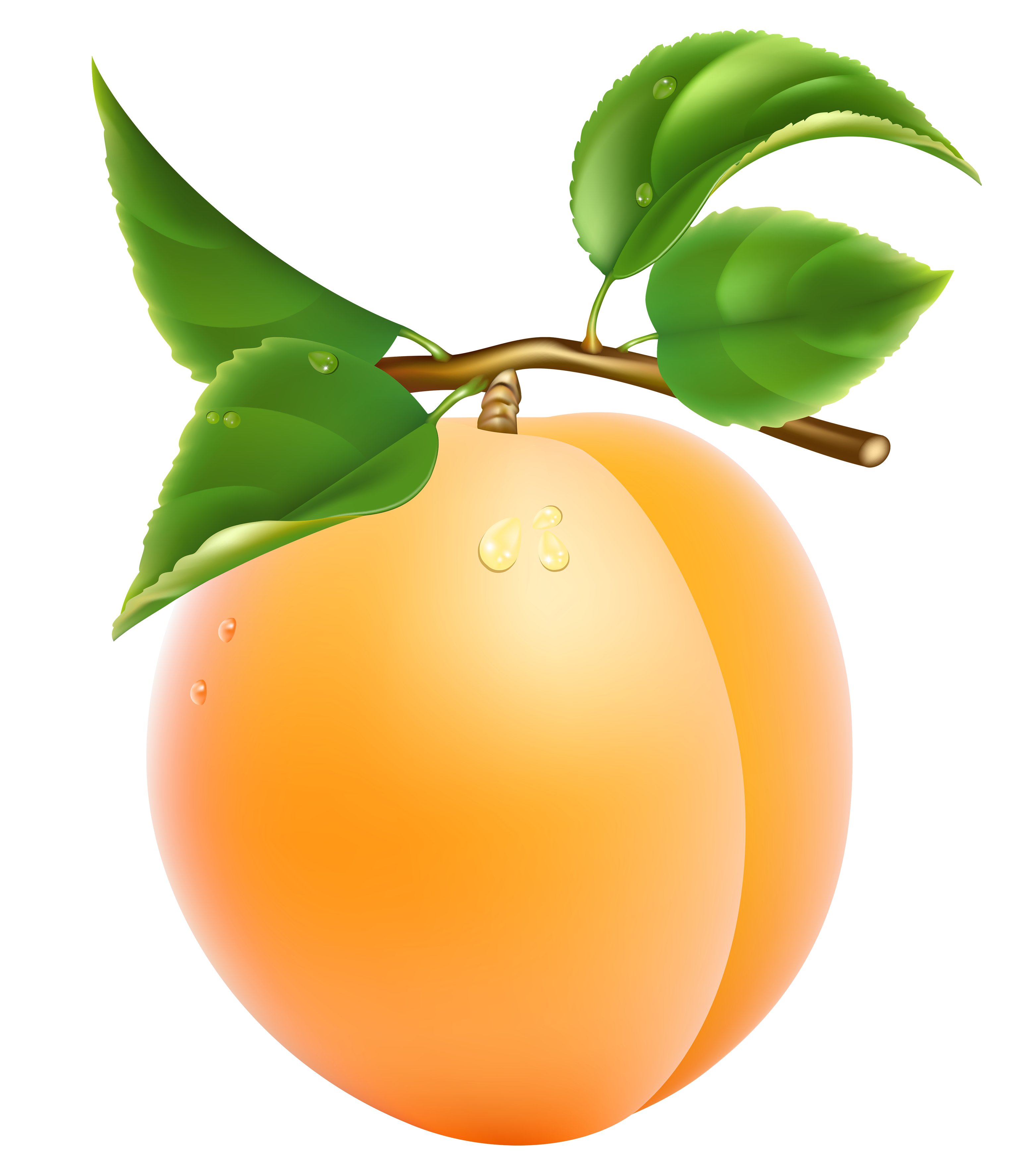Fruit clipart person. Apricot peach free collection